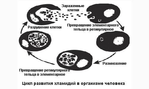 инстаграма развития