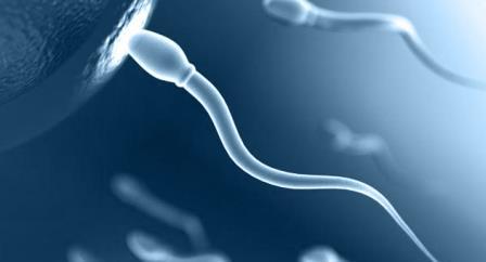 мужская клетка