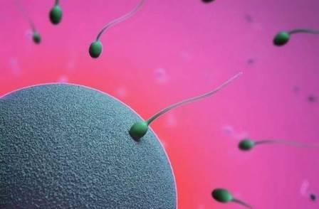 яйцеклетка и сперматозоиды инстаграма