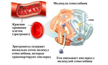 инфограма красных клеток крови