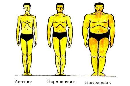 инфограма разных типов тела человека