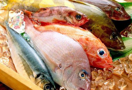 морские сорта рыбы
