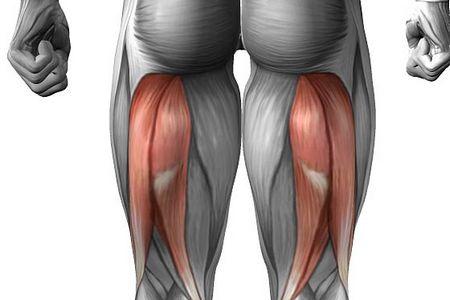 внутренние мышцы ног
