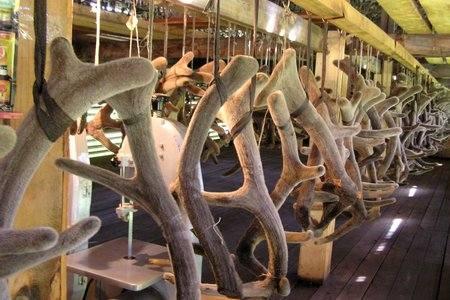 обрезанные рога
