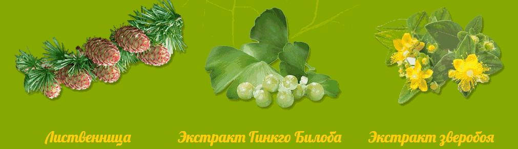 ветки лиственницы гинко билобы и зверобоя