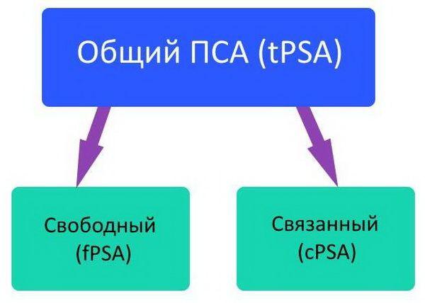 Схема деления анализа на два подвида