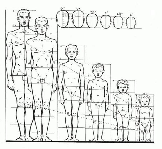 Пропорции фигуры мужчины