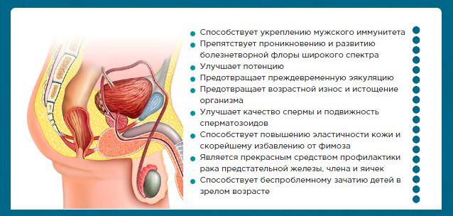 инфографика со способом действия препарата