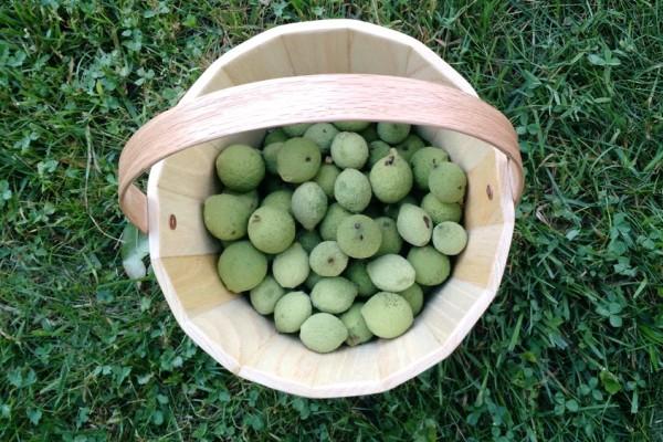 сбор зеленых плодов