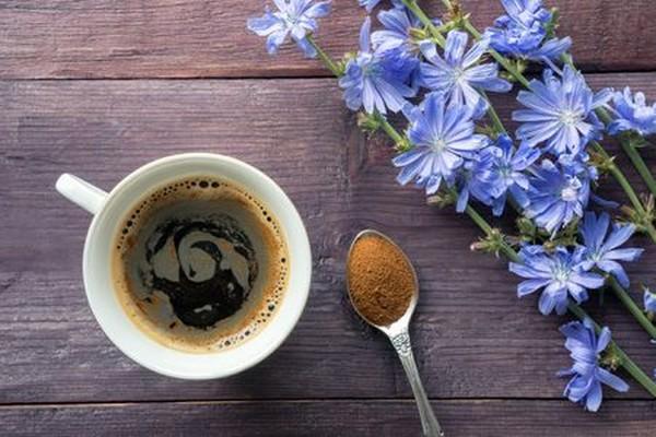 заваренный цикориевый чай