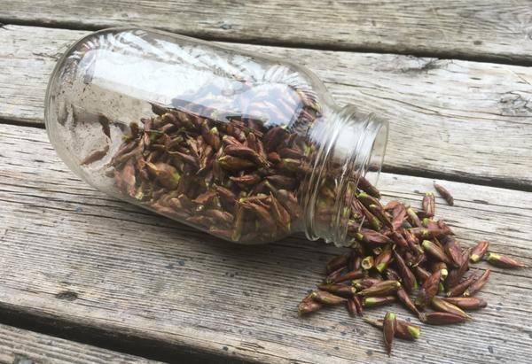 Лечение травяным сбором